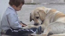 ダウン症の男の子を優しく励まし続ける犬【動画】