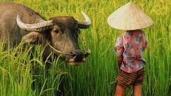 「TPPで日本の米は壊滅」のコラムに「消費者としては大歓迎」の声も