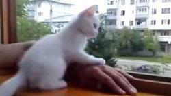 子猫が飼い主の心配をしていて愛らしい【動画】