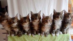 7匹の子猫が一列にならんで首をフリフリするなんて可愛いすぎる【動画】