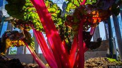 市民農園の1年を早送りで見ると、健康的な食生活を送ってみたくなる【動画】
