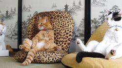 ネコ様、座椅子でくつろぐの巻【動画】