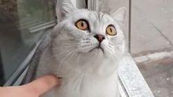 猫の集中力を、なめたらあかん【動画】