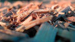 セシウム含む木材チップ放置に「氷山の一角」との声も