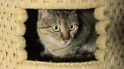 「猫ちぐら」に猫まっしぐら