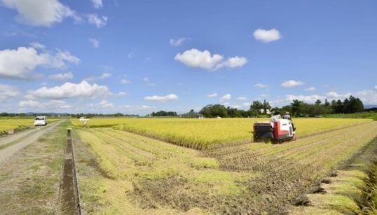 実りの秋 稲刈りの様子をタイムラプスで捉えた動画になごむ【動画】