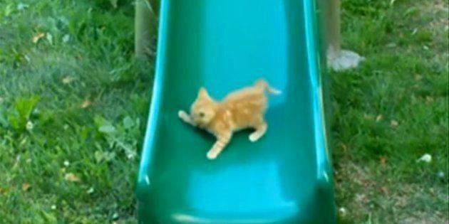 子猫、すべり台に挑む【動画】