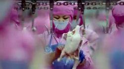 衝撃的で美しい映画『サンサーラ』が描く食肉工場