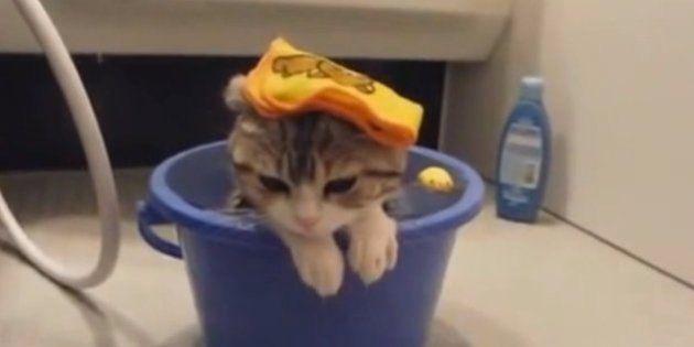 ネコだって水遊びが大好き【動画】