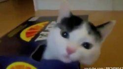 なにかに収まりたがるネコたち【動画】