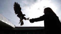 ウィンブルドンで繰り広げられる鷹と鳩の名勝負とは【動画】