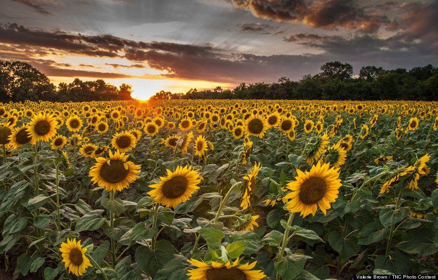 自然の素晴らしさを伝える写真コンテスト