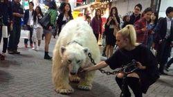 シロクマが渋谷を散歩?