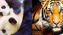 世界最大級のサンディエゴ動物園、レンズを見つめる動物たちの澄んだ瞳が美しい【画像】