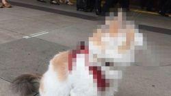 猫みたいな犬? 犬みたいな猫? 新宿駅に現れる【画像】