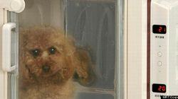 「冷やしわんこ」始めました。ペット用の冷房で猛暑も涼しいワン