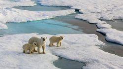 北極海の氷、記録的な喪失