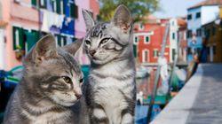 猫たちは水の都ヴェネツィアをいつも気ままに散歩するんだ【画像多数】