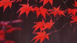 京都といえば秋。それはすなわち紅葉(画像集)