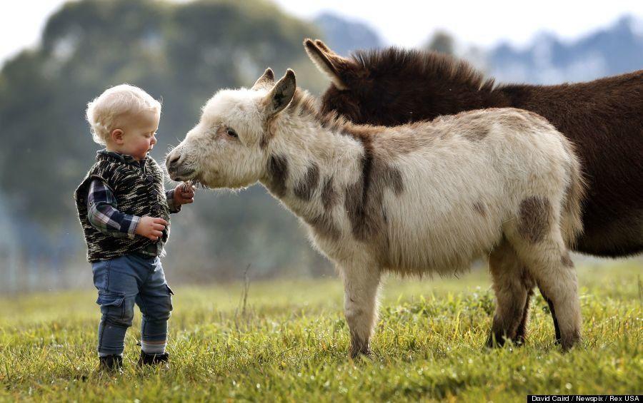 かわいい15か月の男の子と遊ぶミニチュアロバ