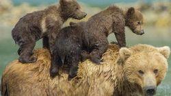 クマも人間も「母の愛」は変わらない【画像】