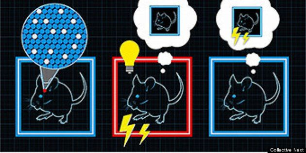 利根川進MIT教授、「ニセの記憶」をマウスで再現
