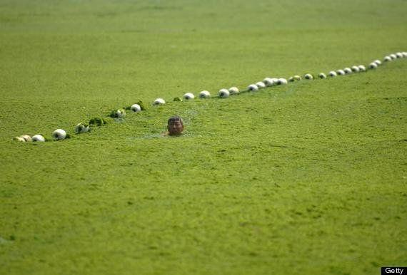 藻にまみれて海水浴:中国沿岸で過去最大の「緑潮」