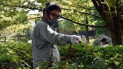 デング熱、東京都外で初の感染者 千葉市の60代男性