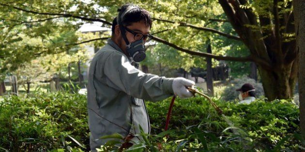 Workers spray insecticide at Yoyogi park in Tokyo on September 5, 2014. Tokyo on September 5 closed most...