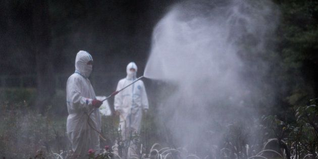 TOKYO, JAPAN - AUGUST 28: Workers spray pesticide in Yoyogi Park on August 28, 2014 in Tokyo, Japan....