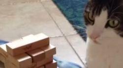 賢い猫はジェンガができる(動画)