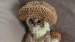 きのこスーツがキュート、カラスから救われた日本の子猫