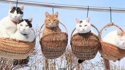 空中カゴに揺られる5匹の猫が愛らしい【動画】