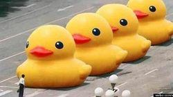 中国政府「巨大アヒル」にピリピリ