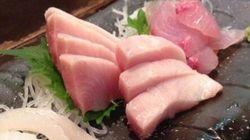 幻の高級魚「スマ」の研究本格化 養殖でクロマグロの味に