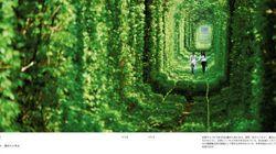 「夏休みに行きたい!世界の絶景」森のトンネルから秘島まで【画像】