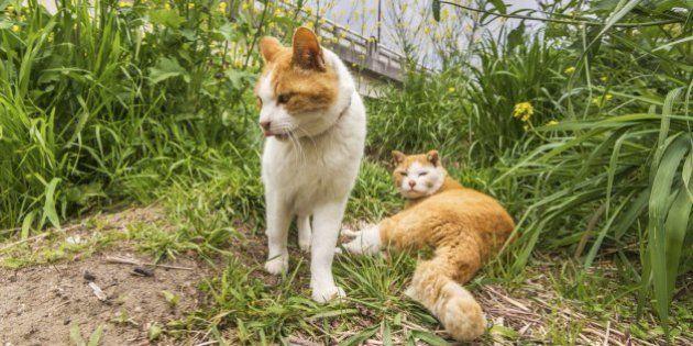 猫の不審死、東京・大田区で相次ぐ 毒殺か、警視庁は動物愛護法違反で捜査