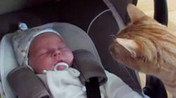 赤ちゃんに初めて出会った猫の驚きっぷりがたまらない【画像】