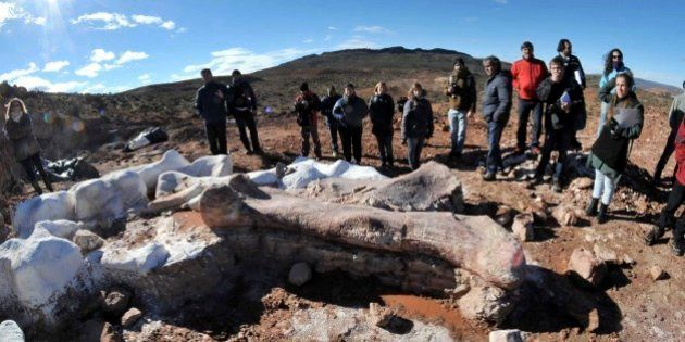 アルゼンチンで竜脚類の化石発見 世界最大の恐竜か