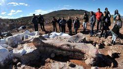 世界最大の恐竜か、アルゼンチンで竜脚類の化石発見