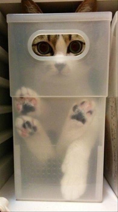 それで隠れてるつもり?