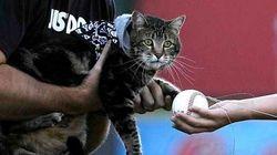 「少年を猛犬から救った猫」野球チームの始球式で投球【画像】