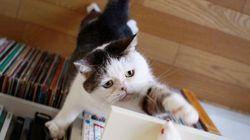 「まこ」という名の不思議顔の猫、見ているだけで癒される【画像】