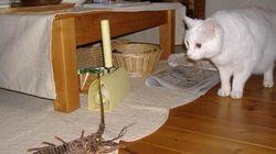 ネコ 対 伊勢エビ
