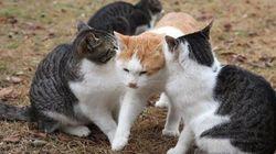 仲良し猫カップルがキスするのを無言で阻止する猫【画像】