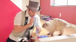 猫にマジックを見せてみたけど無視され続けて悲しい【動画】