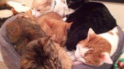 【ネコ】何匹一緒に寝てるの?