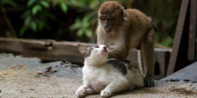 猫がマッサージされて何だか気持ちよさそう【写真】