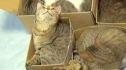 9匹がスヤスヤ眠る「猫アパート」に癒やされる【動画】