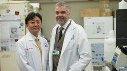 小保方さんの方法とは異なる「STAP細胞・作成手順」、バカンティ教授ら所属の研究室が公開
